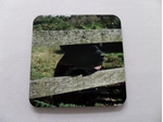 Picture of Set of 4 Labrador coasters