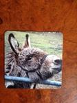 Picture of Donkey cork backed coaster