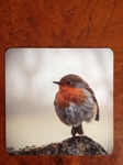 Picture of Robin cork backed coaster