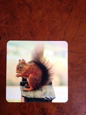 Picture of Red squirrel metal coaster