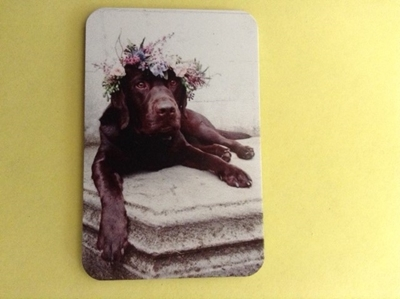 Picture of Chocolate Lab with flower garland fridge magnet