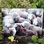 Picture of Herdwick sheep worktop protector