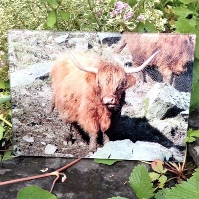 Picture of Highland Cow worktop protector