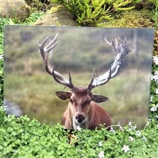 Picture of Red Deer Stag Worktop Protector