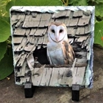 Picture of Barn Owl  slate coaster