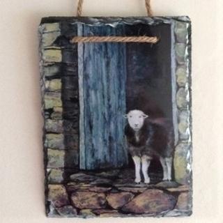 Picture of Herdwick sheep watching the rain