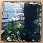 Picture of Wild Daffodils by the lake slate coaster