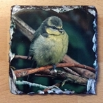 Picture of Baby blue tit slate coaster