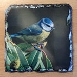 Picture of Blue tit slate coaster