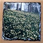 Picture of Dora's field daffodils slate coaster
