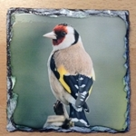 Picture of Goldfinch slate coaster