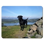 Picture of Black Labrador place mat