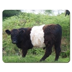 Picture of Belted Galloway place mat